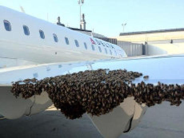 Swarm of Bees Delays Delta Air Lines Flight In Pittsburgh