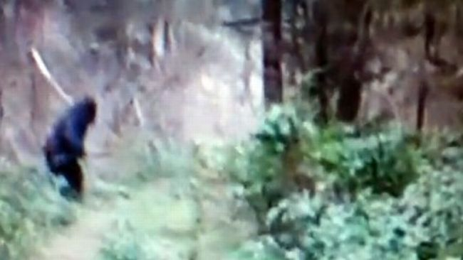 Bigfoot Sighting Video From Ohio 2012 The Real Deal?