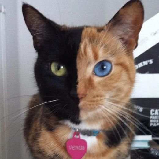 Two-Faced Cat becomes internet Sensation