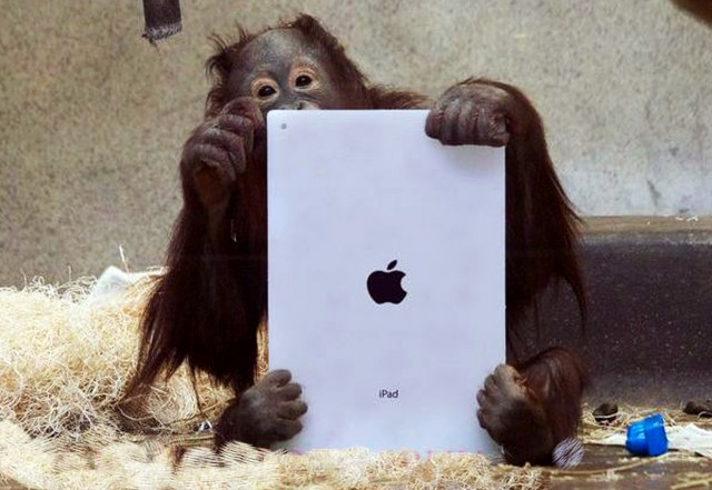 Canadian Zoo Keepers use iPads, Apps For Apes