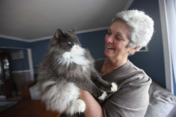 Cat Found After 3 Years After Hurricane Sandy