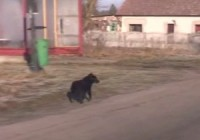 Dog Saves Girl's life in Poland