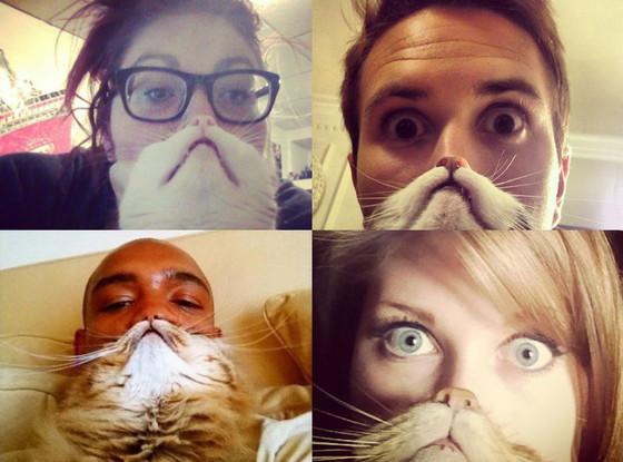 Cat Bearding Images Becomes Latest Internet Meme