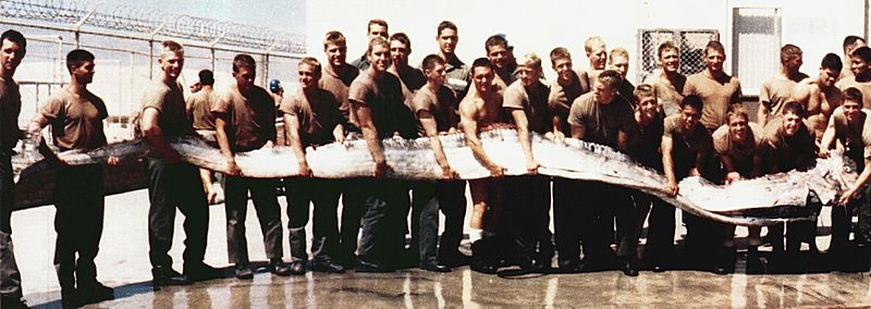 United States servicemen holding a 23-foot (7.0 m) Giant Oarfish, found washed up on the shore near San Diego, California in September 1996.