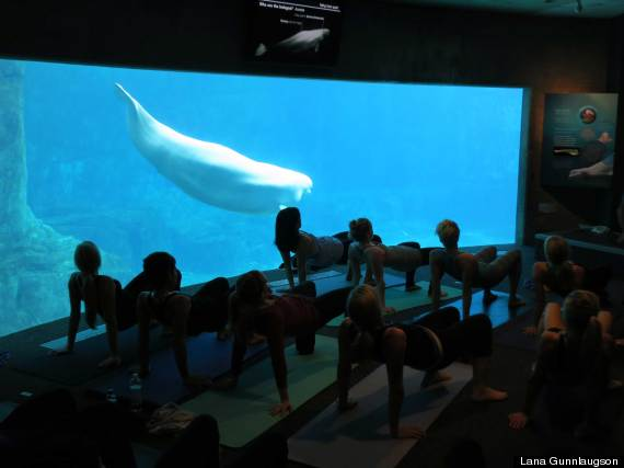 Yoga with the Belugas
