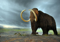 Wooly Mammoths Died Due To Climate Change