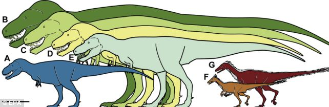 An illustration provided by the Perot Museum of Nature and Science shows the size comparison of the T-Rex's smaller cousin (see A and B)