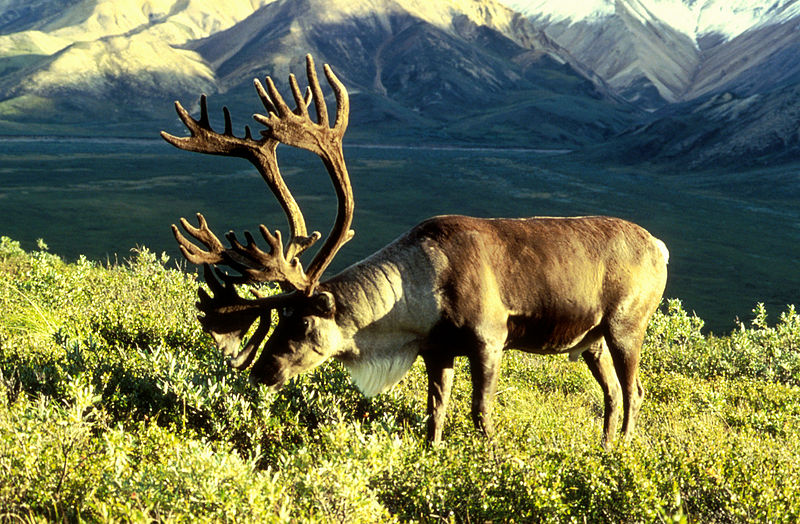 Ancient Caribou Hunting Grounds Located Beneath Lake Huron