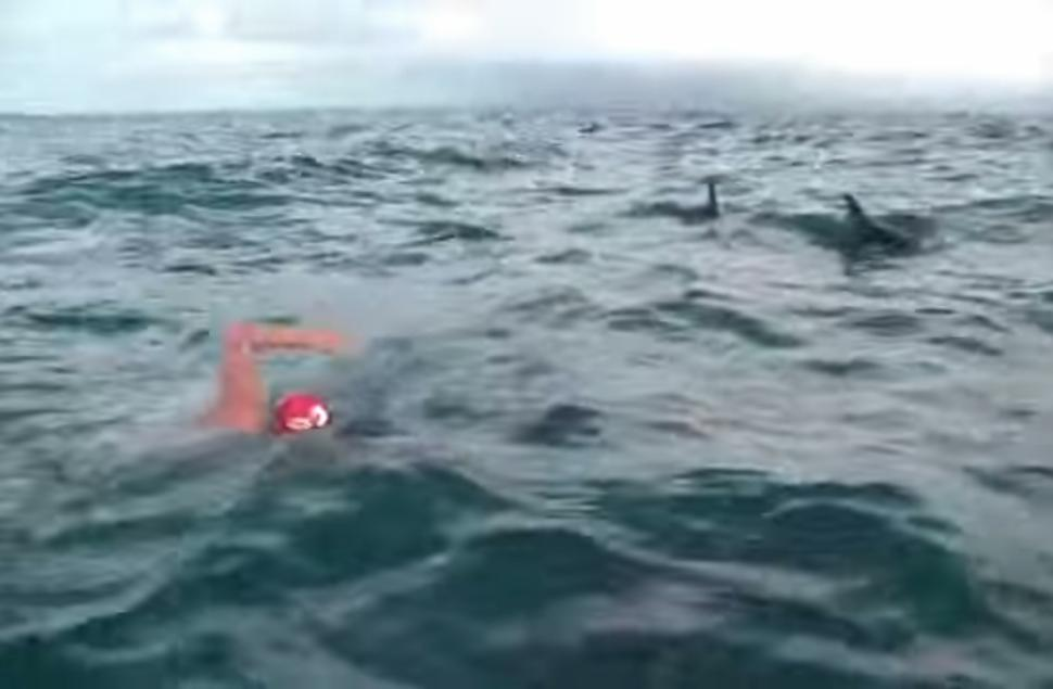 Dolphins protect Adam Walker from shark