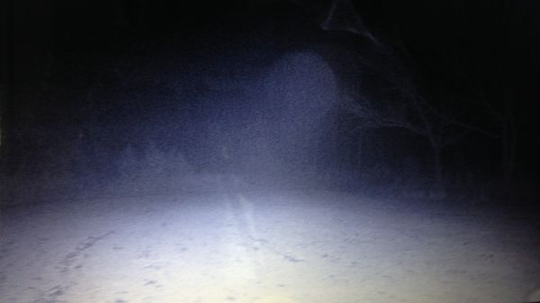 'UFO' descends on deer in Mississippi woods