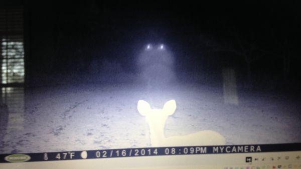 Deer UFO Sighting In Mississippi?  (VIDEO)