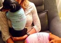 Telling her fans: Carrie Underwood reveals she is pregnant by posting pictures of her pooches with T-shirts that say they're going to be big brothers and sisters