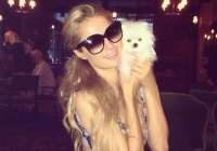 Paris Hilton happily announced -- via Twitter, from the Bowery Hotel in New York -- the arrival of her new puppy from Calgary. (@ParisHilton/Twitter)