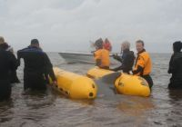 Two Beached Pilot Whales Rescued at Sunbury Cove