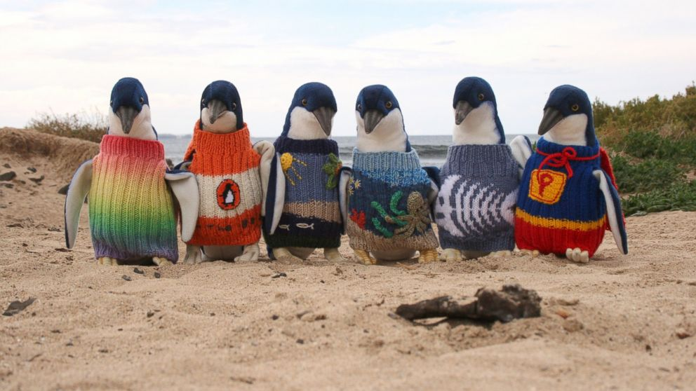 Penguin Australia  city photo : Australia Penguin Sweaters | eCanadaNow