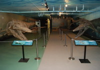 "Two mosasaur are shown at the Canadian Fossil Discovery Centre in Morden, Man., in this undated handout photo. The world's largest publicly-displayed mosasaur now has a companion. The 13-metre-long marine reptile fossil of ""Bruce"" has been at the centre since 2003, and on the weekend the centre unveiled a nine-metre-long mosasaur fossil named ""Suzy."" THE CANADIAN PRESS/HO"""