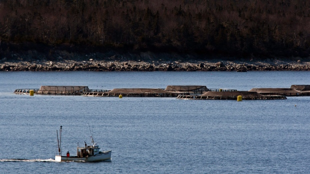 Cooke Aquaculture's fish farm in Shelburne Harbour on Nova Scotia's South Shore is one of the sites where officials believe fish have died due to a so-called superchill. (The Canadian Press)