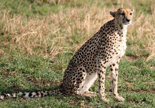 Mother Dangles Then Drops Toddler Into Cheetah Exhibit