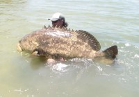 552 pound fish grouper