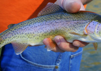 Parks Canada succeeds in removing problematic trout from Banff Lake