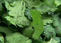 The Food and Drug Administration has issued a ban on some cilantro imported from Mexico after an investigation to determine the cause of hundreds of reported intestinal illnesses in the United States dating back to 2012. (Credit: CNN)