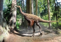 CAPTION This is an illustration of Ornithomimus based on the findings of preserved tail feathers and soft tissue CREDIT Julius Csotonyi
