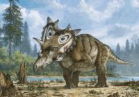 An artist's rendering of Judith, a horned dinosaur Spiclypeus shipporum, shows it limping gingerly across a flood plain 76 million years ago. It had a bone infection and arthritis in its left forelimb, an examination of its fossils shows. (Mike Skrepnick)