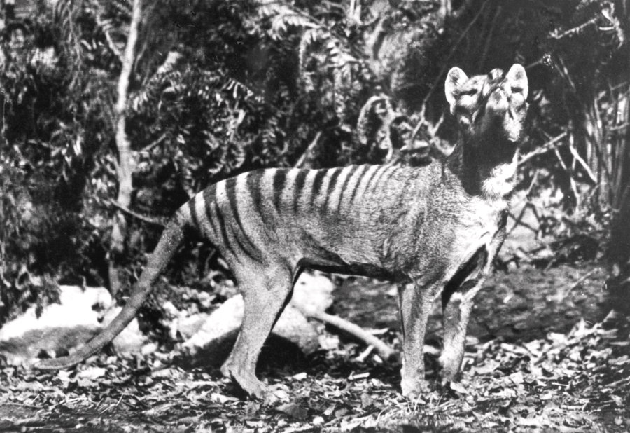 Extinct animal sightings - photo#28