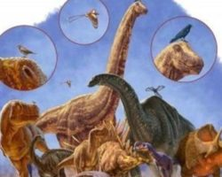 new study redesigns the family tree of dinosaurs
