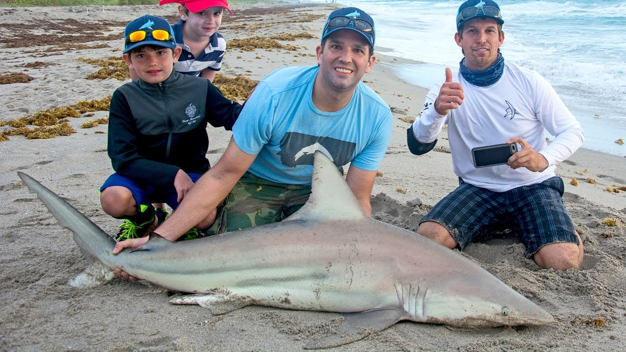 Trump Jr. shark